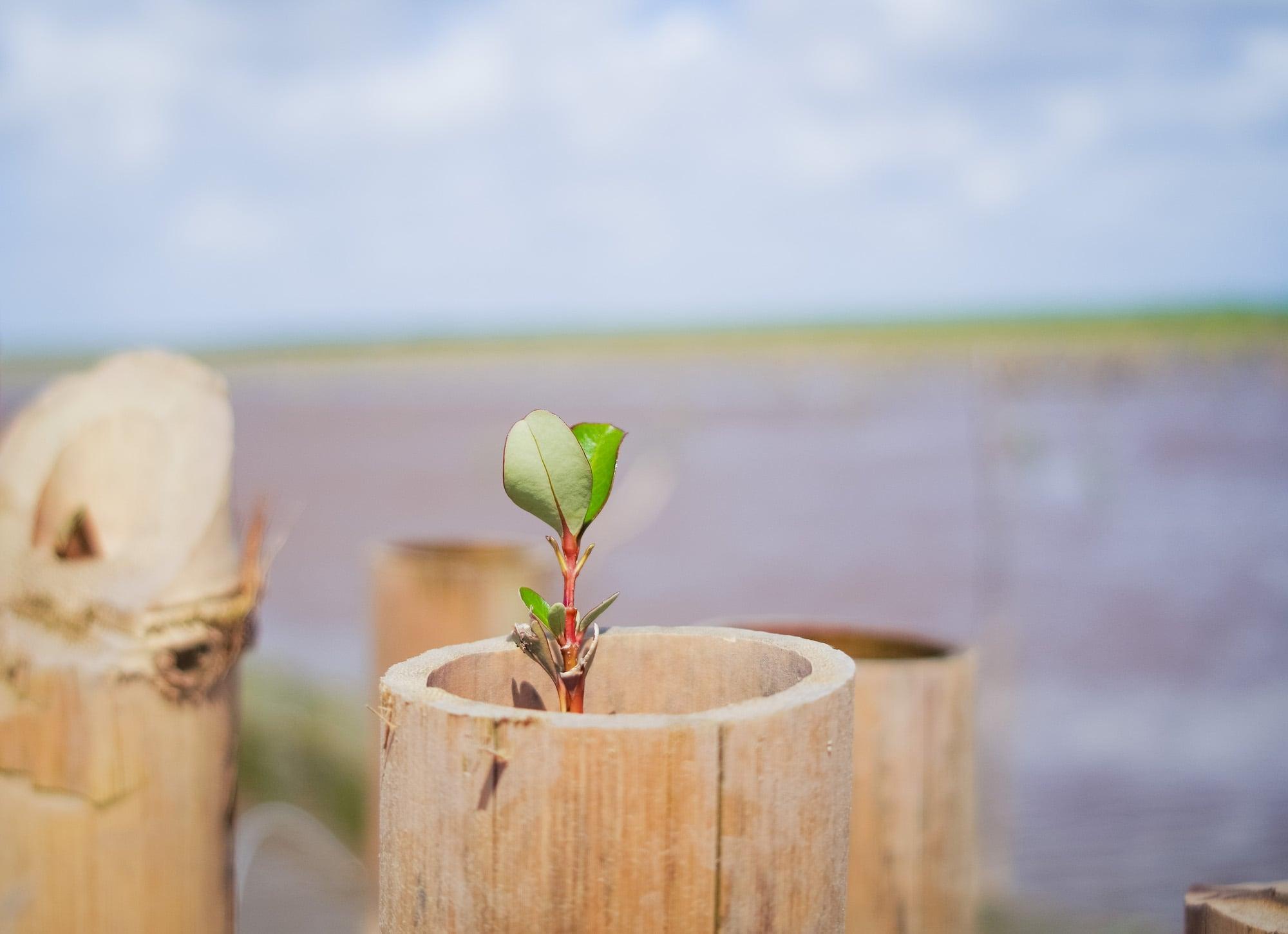 Hạnh Phúc Xanh kêu gọi cộng đồng cùng chung tay trồng rừng ngập mặn tại Sóc Trăng