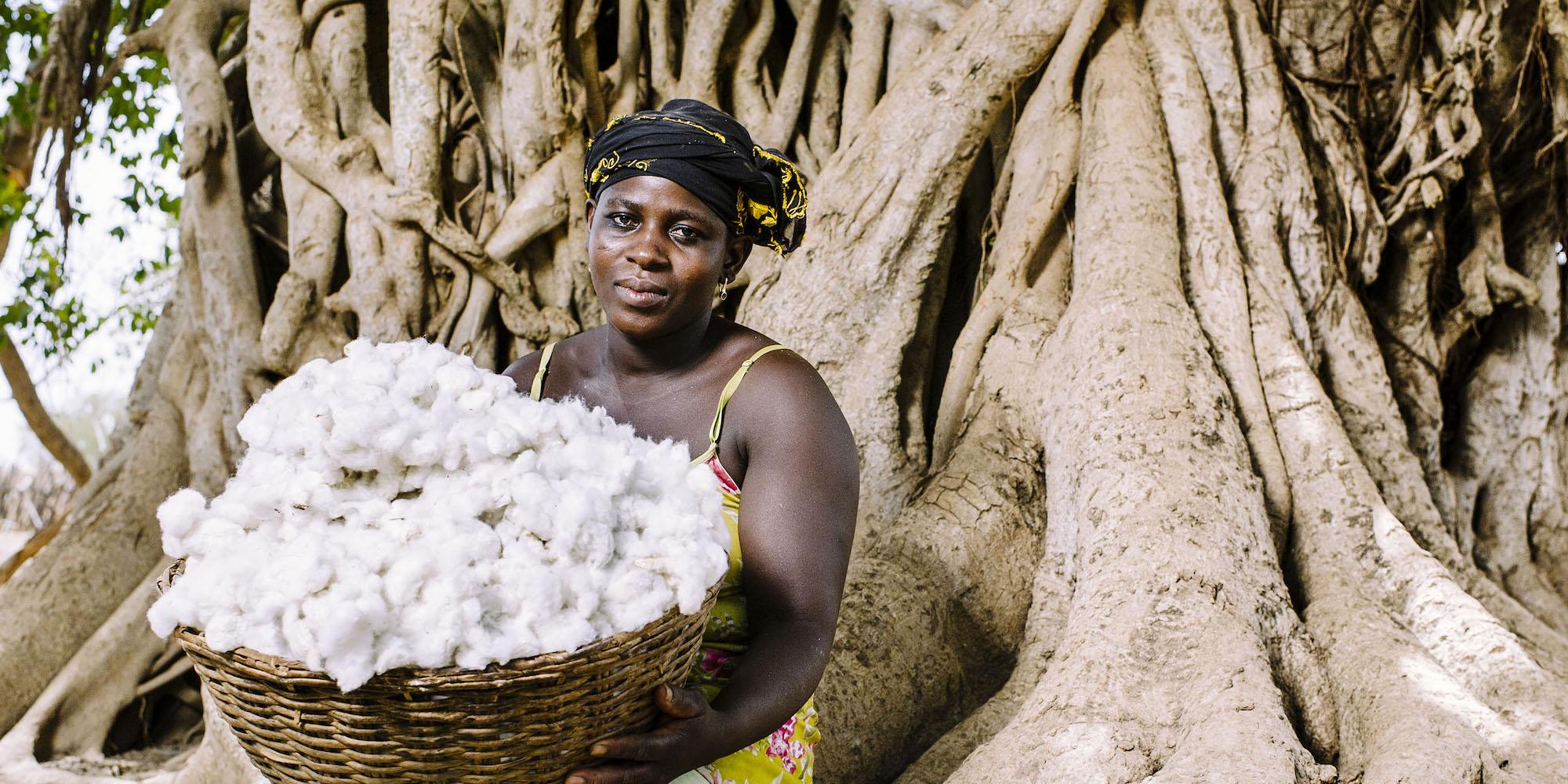 Cotton — Bài toán đạo đức của ngành công nghiệp thời trang