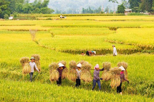 External Demand Boosting Vietnam, ASEAN Growth