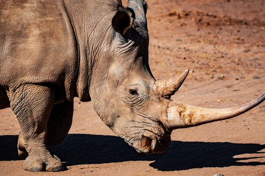 """""""When I Grow Up, I Want To Protect Rhinos"""": An Emotional Plea To Stop Wildlife Trafficking"""