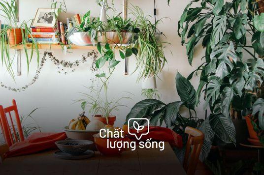 5 Kênh YouTube trồng cây giúp biến căn nhà thành khu rừng