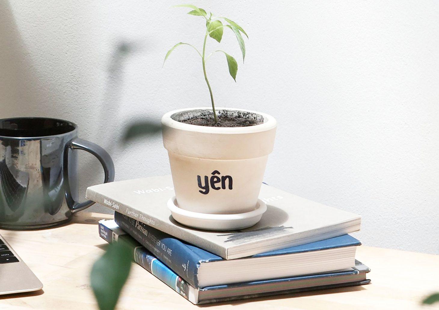 Yen Concept Review