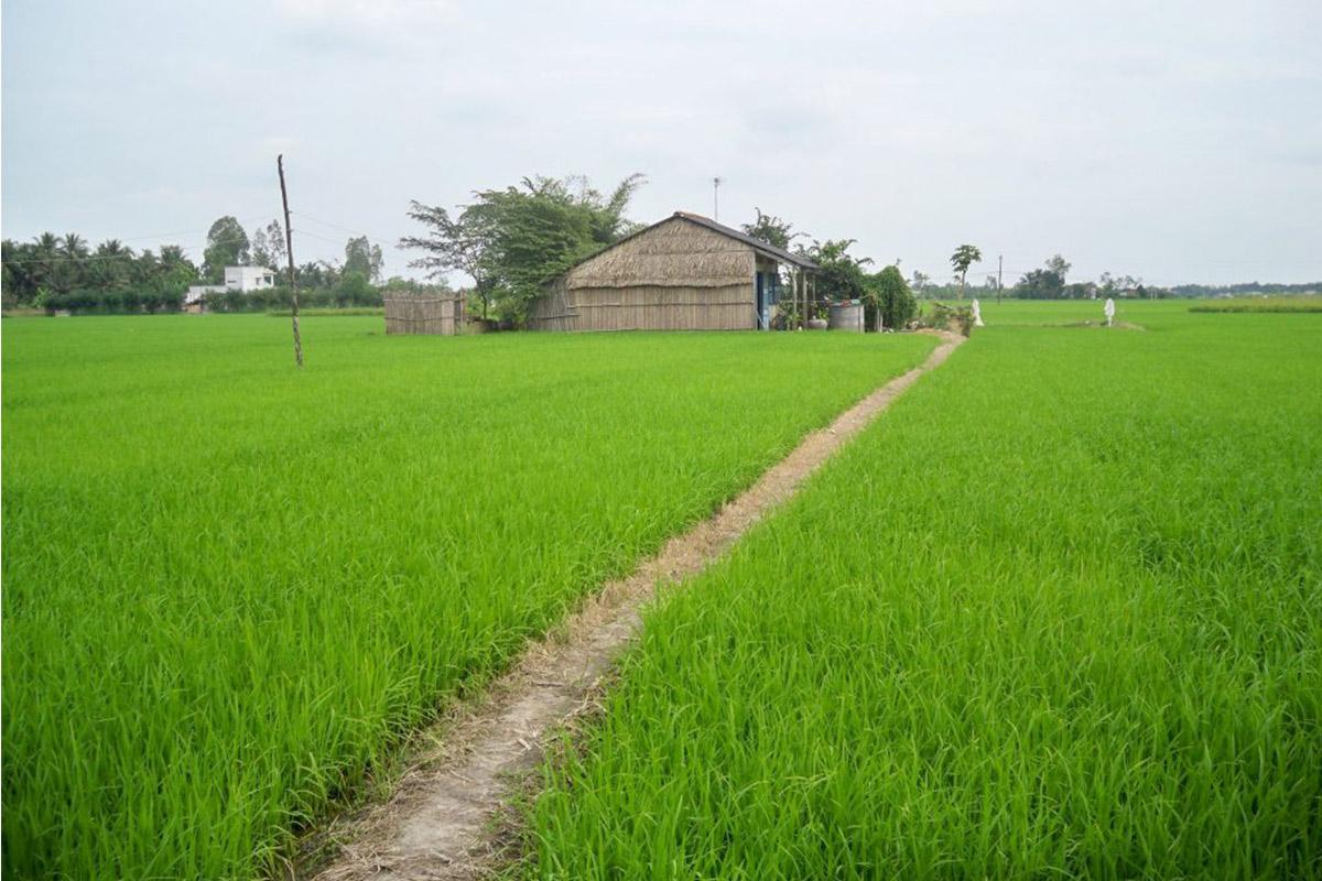 Mien Tay Soc Trang