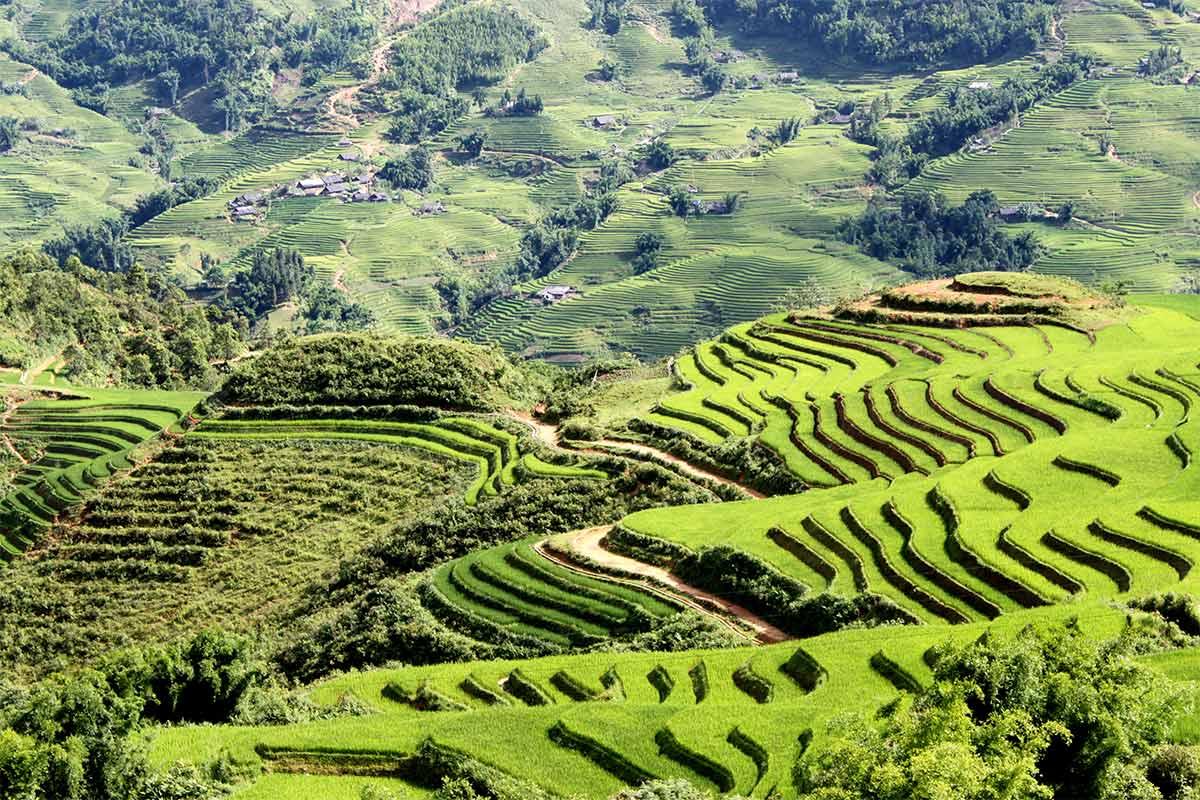 Sapa Landscape