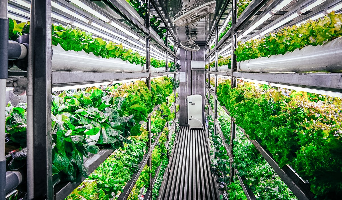 Indoor Farming In Vietnam From Shipping Container To