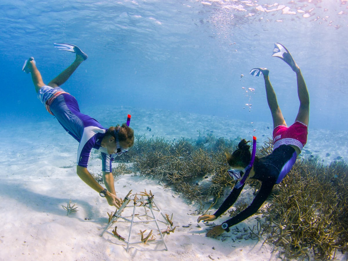Anantara Dhigu Maldives coral preservation program