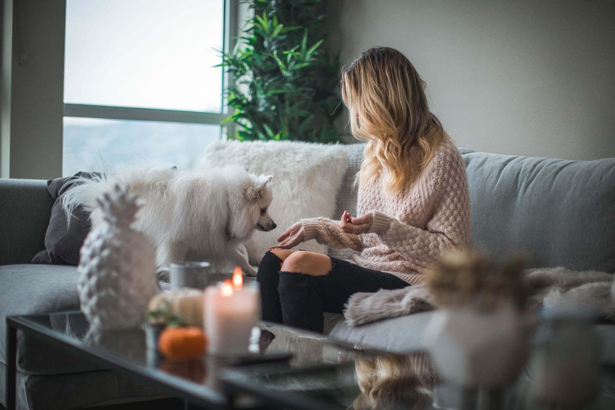 Tips giúp các chú chó thành thị vượt qua mùa cách ly xã hội